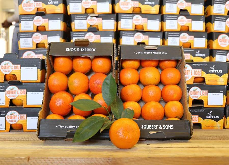 Citrus-Joubert-en-Seuns